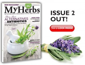 My Herbs 2
